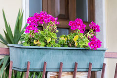 Pink geranium  flowers on a balcony in Italy Stock Photography
