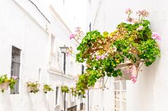 Pink geranium in the wall. Pink geranium adornment in the streets of Rota, Cadiz, Andalucia, Spain stock images