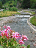 Pink Geraniums With Background River Royalty Free Stock Photos