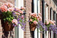 Pink geraniums hanging at facade Royalty Free Stock Photo