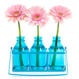Pink Gerber in blue vases Stock Images