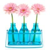 Pink Gerber in blue vases Stock Images