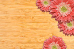 Pink Gerber Daisies with Water Drops on Bamboo. Bright Pink Gerber Daisies with Water Drops on a Bamboo Wood Background with Copy Space Stock Image