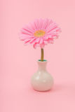 Pink gerber daisy in vase Royalty Free Stock Photos