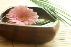 Pink gerber floating in wooden bowl. Stock Image