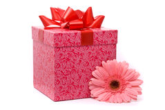 Pink Gerber Flower And Gift Box Royalty Free Stock Photo
