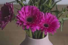 Pink gerber flowers bouquet on a decoration pot. On a  wooden background royalty free stock images