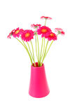 Pink Gerber flowers inl vase Stock Images