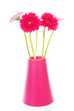 Pink Gerber flowers in vase Stock Images