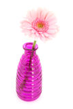 Pink Gerber in glass vases Royalty Free Stock Images