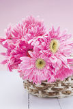 Pink gerbera in basket with pink background close up Royalty Free Stock Photography