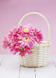 Pink gerbera in basket with pink background Stock Photo