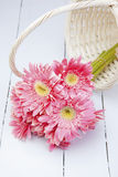Pink gerbera in basket with pink background Royalty Free Stock Photography
