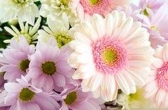 Pink Gerbera. Beautiful bouquet of pink flowers Stock Photos