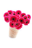 Pink gerbera Royalty Free Stock Photos