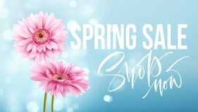 Pink gerbera daisies on a blue bokeh background. Spring sale lettering. Vector illustration Royalty Free Stock Photos