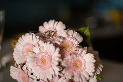 Pink gerbera daisies in the bouquet Royalty Free Stock Photo
