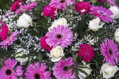 Pink gerbera daisy and baby's breath Royalty Free Stock Photos