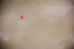 Pink gerbera daisy floating in a pond. Pink gerbera daisy whimsically floating in a pond Royalty Free Stock Images