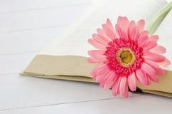 Pink Gerbera daisy flower at opened book Stock Photos