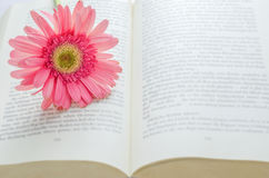 Pink Gerbera daisy flower at opened book Stock Images