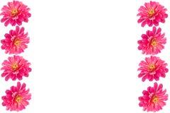 Pink Gerbera flower frame Royalty Free Stock Image