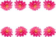 Pink Gerbera flower frame Stock Image