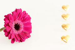 Pink gerbera flower and golden hearts Stock Images
