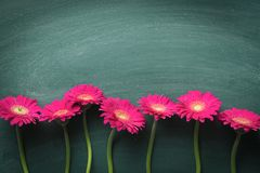 Pink gerbera flower. Stock Photos