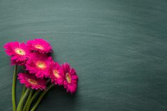 Pink gerbera flower. Royalty Free Stock Images
