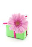 Pink gerbera flower on a present Stock Images