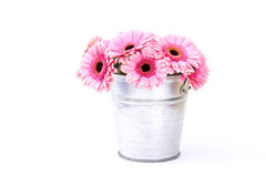 Pink gerbera flowers in a bucket Stock Photography