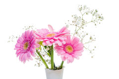 Pink gerbera flowers in a vase on white background. Three pink gerbera isolated on white background Stock Photo