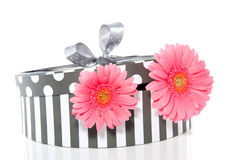 Pink gerbera in a giftbox Royalty Free Stock Images