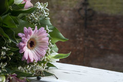 Pink gerbera with green leaves and brown wall Royalty Free Stock Photo