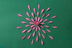 Pink gerbera pestals on green background royalty free stock photo