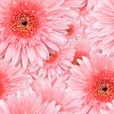 Pink Gerbera seamless pattern Royalty Free Stock Photo