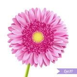 Pink gerbera single flower. Detailed Vector Illustration of pink gerbera or daisy flower. Isolated on white. Gradient mesh, EPS10 Stock Photo