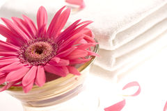 Pink gerbera and white towels Stock Image
