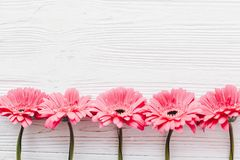 Pink gerbera on white wooden background, flat lay with space f. Or text. Bright Floral greeting card mockup. Wedding invitation, happy mother day or Valentine royalty free stock photo