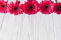Pink gerbera on white wooden background,  space for text. Bright Stock Images