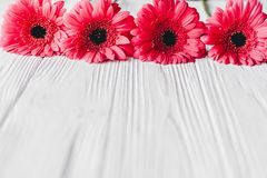 Pink gerbera on white wooden background, space for text. Floral Royalty Free Stock Photos