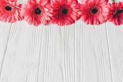 Pink gerbera on white wooden background, space for text. Floral Stock Image