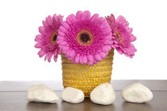 Pink Gerbera in yellow basket with four white rocks Royalty Free Stock Images