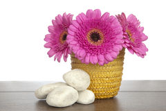 Pink Gerbera in yellow basket and white rocks Royalty Free Stock Photos