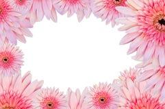 Pink gerberas border frame Royalty Free Stock Image