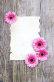 Pink gerberas and empty sheet Royalty Free Stock Photography