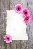 Pink gerberas and empty sheet Royalty Free Stock Photos