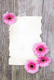 Pink gerberas and empty sheet Stock Photo