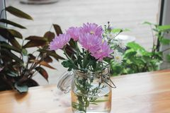 Pink gerberas and white chamomiles in a transparent jar on a wooden table surrounded by plants in sunny room stock photos